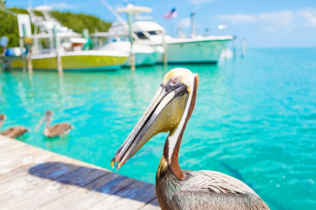 Cayos de la Florida +Miami + Nueva York!!! - Nap Travel